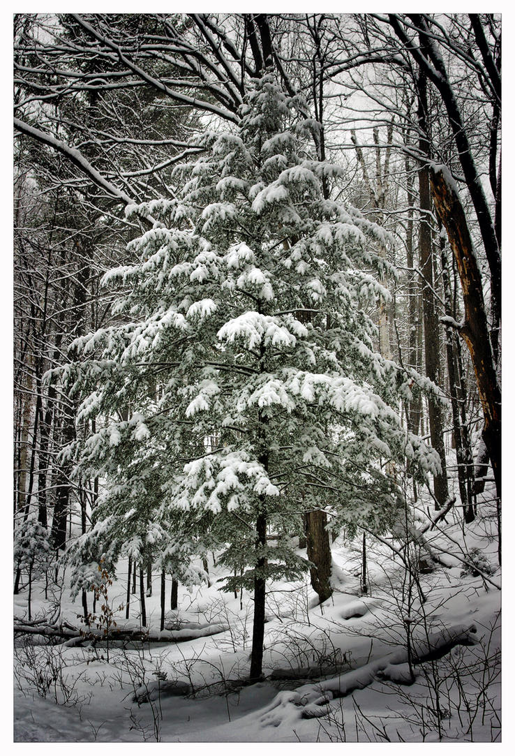 Christmas in the woods by jasonwilde on deviantart