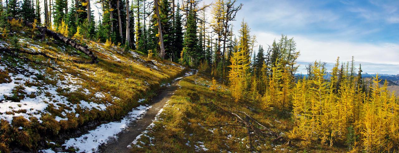 Frosty Mountain Larch Meadows by jasonwilde