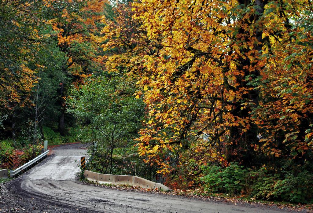 Autumn Corner by jasonwilde