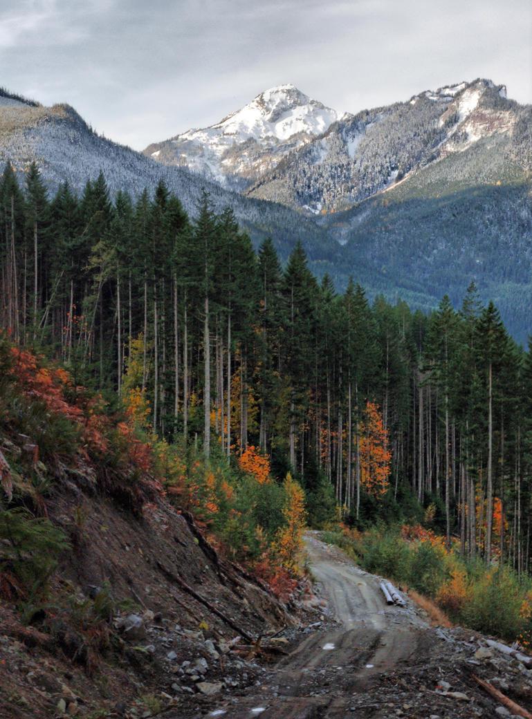 Logging Dreams by jasonwilde