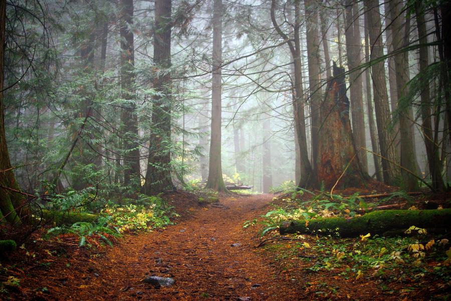 Evening Mist by jasonwilde