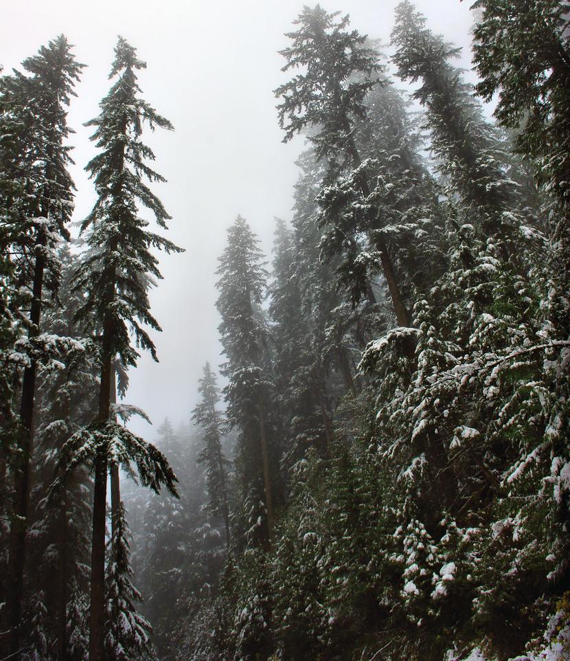 Forested Fog by jasonwilde