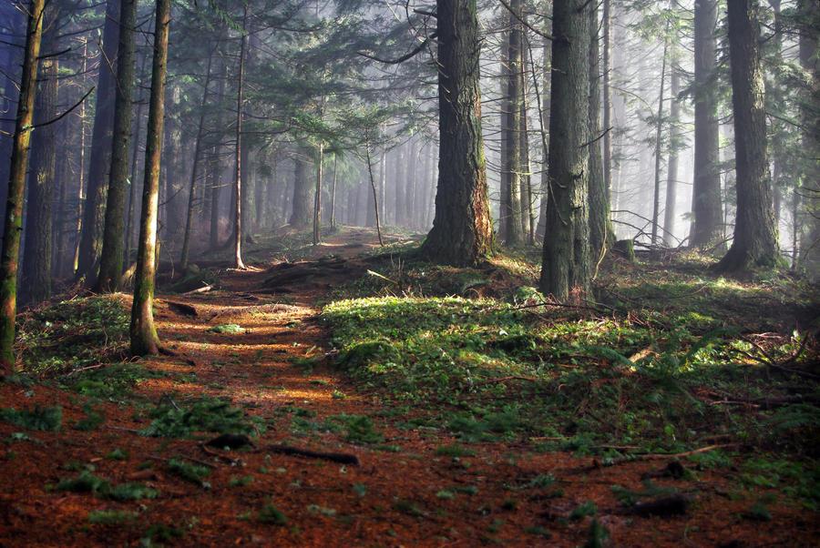 Owls in the Mist by jasonwilde