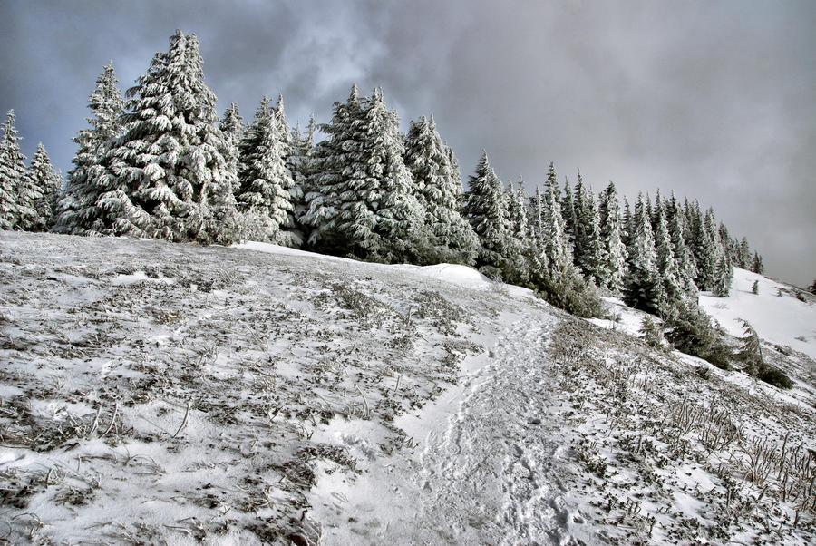 Frosted Hillside by jasonwilde