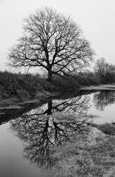By The Old Oak