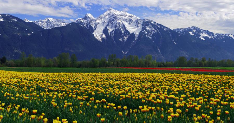 Mellow Yellow by jasonwilde