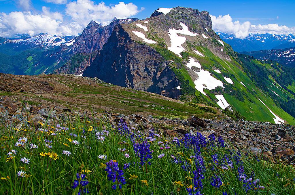 Wildflower Wilderness by jasonwilde