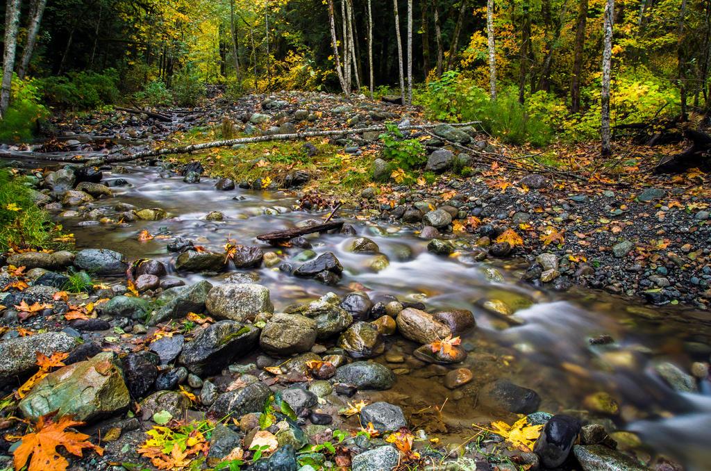 Fall has Fell by jasonwilde