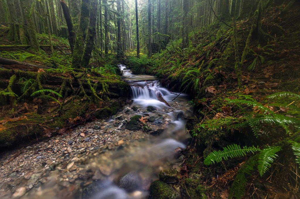 Lush Green Rain by jasonwilde