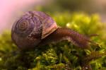 Snail Scape