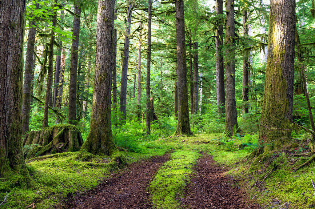 Roads to Neverland by jasonwilde