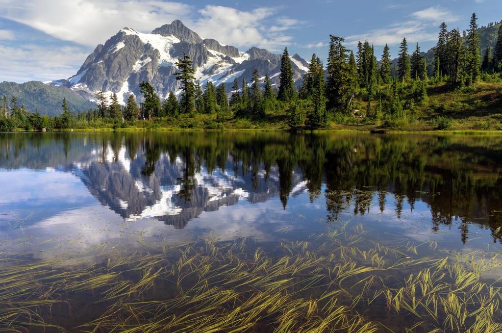 Shuksan Reeds by jasonwilde