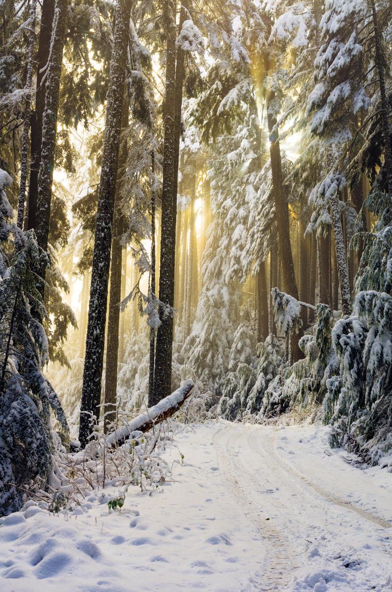 Snow Rays by jasonwilde