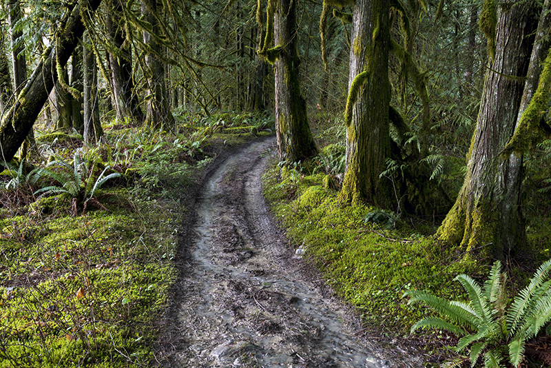Creek Wood by jasonwilde