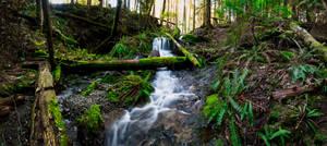 Waterfall Trail Panoramic