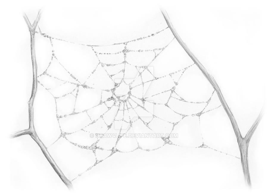 Spiderweb With Dew By Draw4life On Deviantart