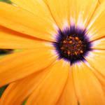 Orange by EaEriE
