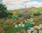 Texas Prickly Poppies