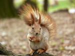 Squirrely dinner by Feasul-Oniisama