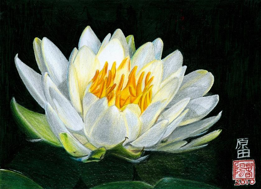 Flor de loto by carmenharada