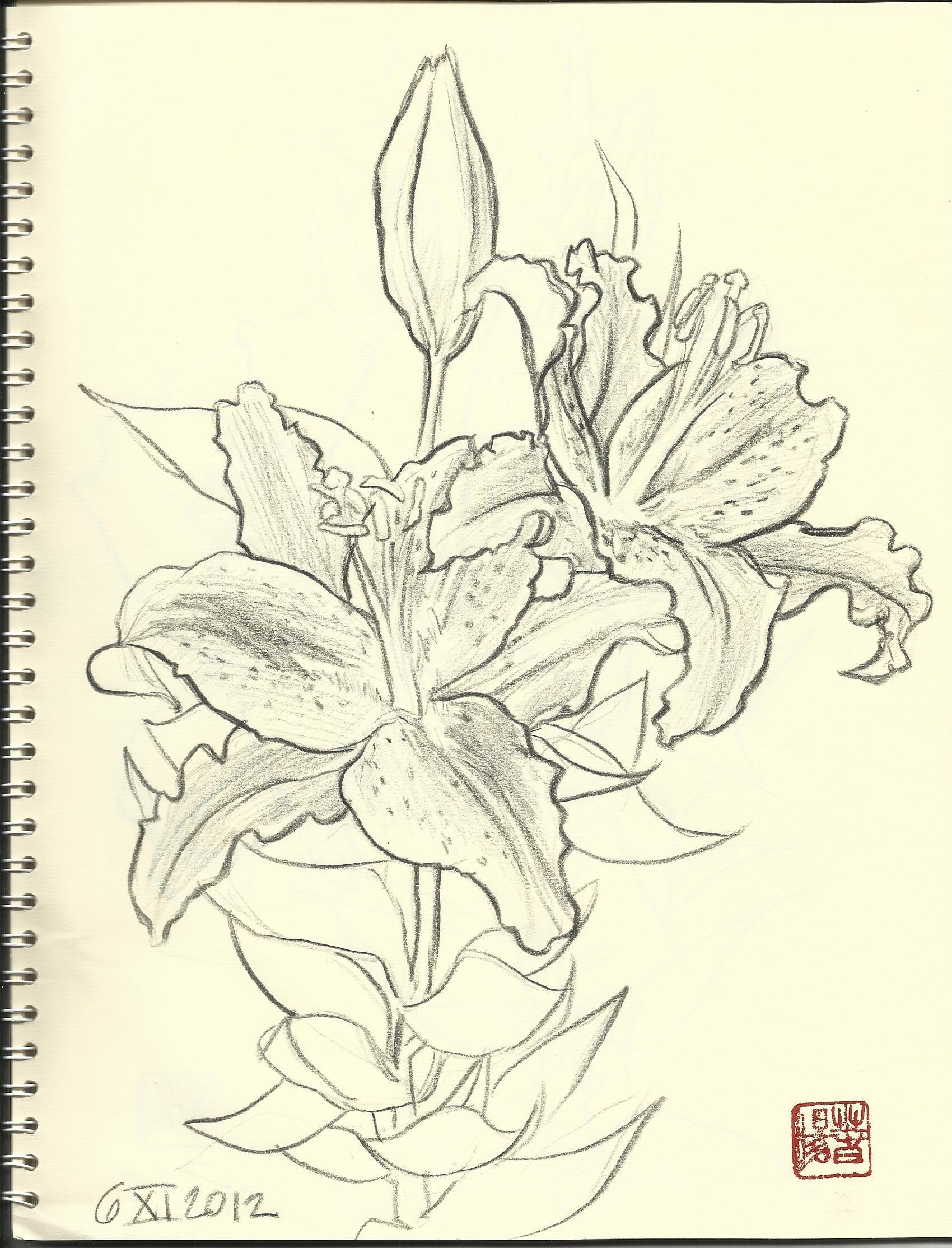 Flower sketch by carmenharada on DeviantArt
