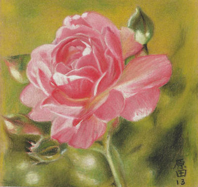 ROSE by carmenharada