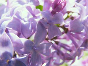Flowers X