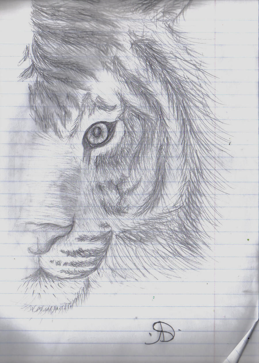 tiger face by D...