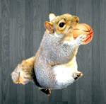 Squirrel playing basketball