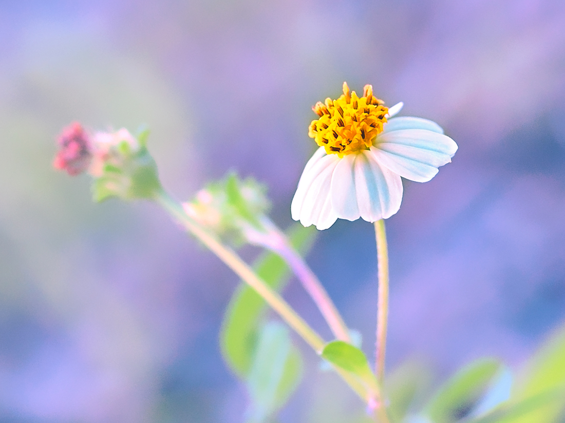 Interim Beauty by skdennard
