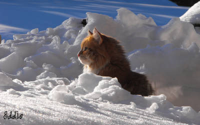 Eddie in the snow, scouting 10 by cyberdel