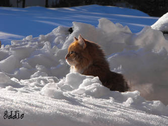 Eddie in the snow, scouting 3 by cyberdel