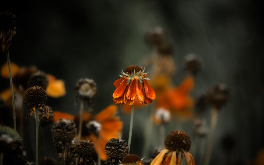 Autumn_1680x1050 by laurentis