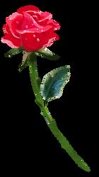 A Single Rose by BrookeGillette