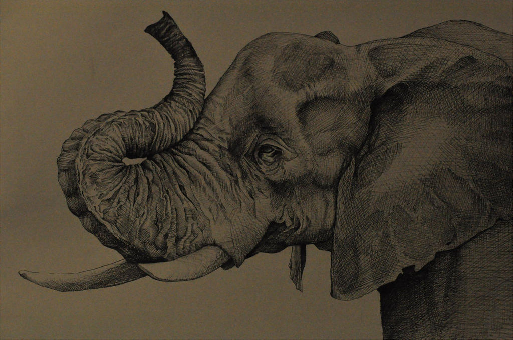 Ink pen Elephant by Friday70