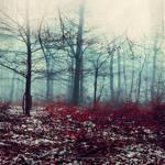 Crimson Floor - Snow On Wet Fall Foliage