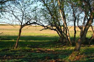 Field Background Stock 002 by EssenceOfPerception