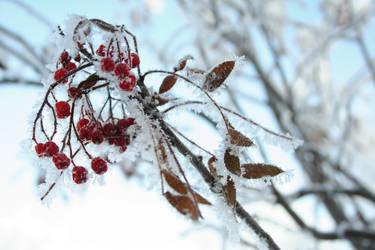 Frost Bite 001 by EssenceOfPerception