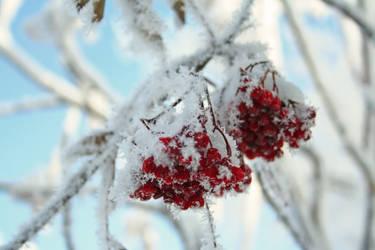 Frost Bite 002 by EssenceOfPerception