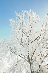 Frost Bite 005