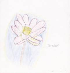 Second flower attempt.