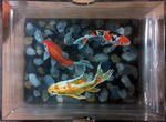 Goldfish Box by mattmcmanis
