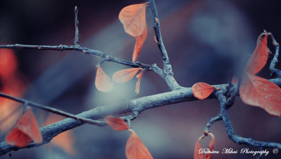 I love autumn! by DumitruMihai