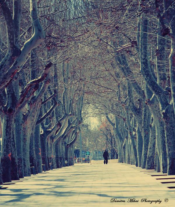 Walk by DumitruMihai