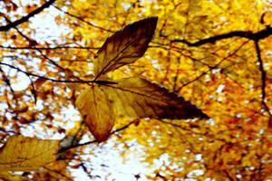 Autumn by YG7