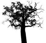 Tree Number three