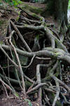 Roots too