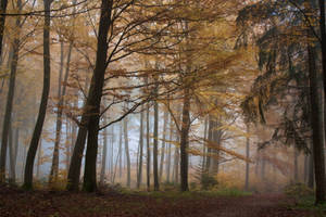 Foggy Woods 1 by Jantiff-Stocks