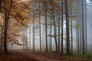 Foggy Wood 2 by Jantiff-Stocks