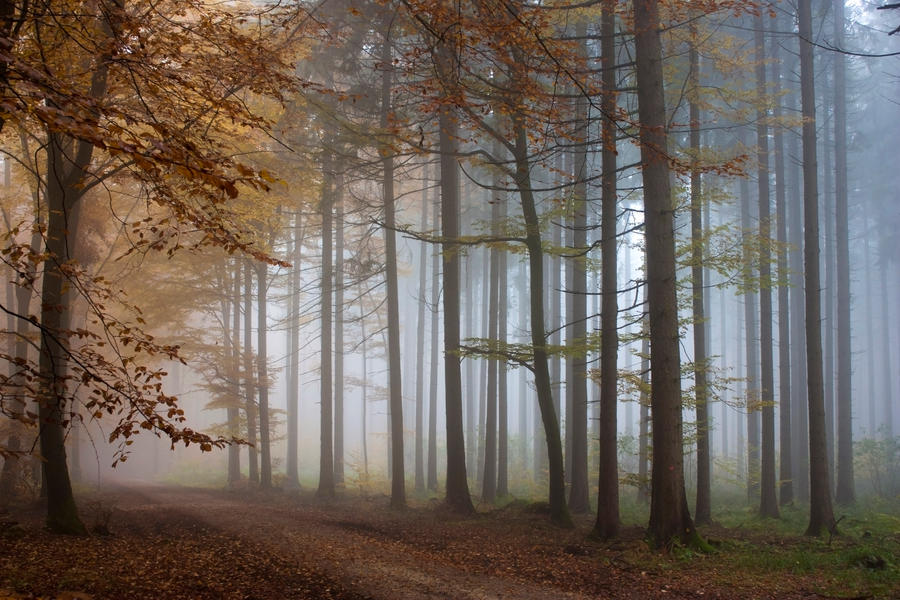 Foggy Wood 2 by Jantiff-Stocks